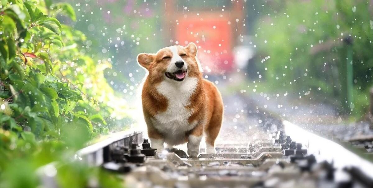 110 frases de perros