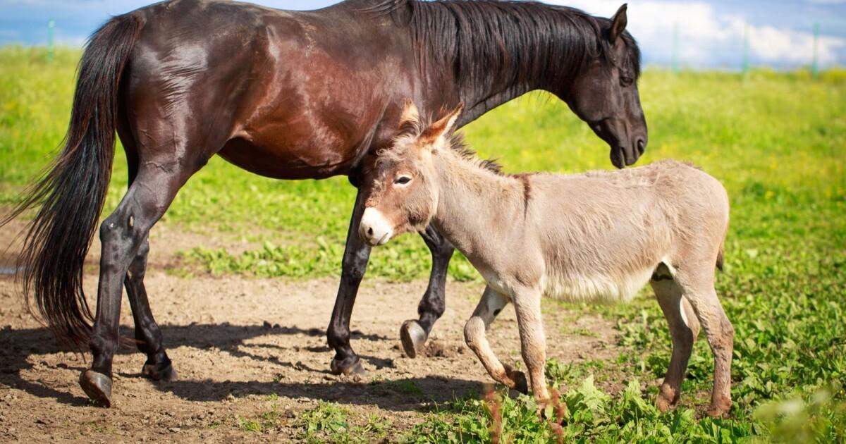 Diferencias entre caballos y otros animales