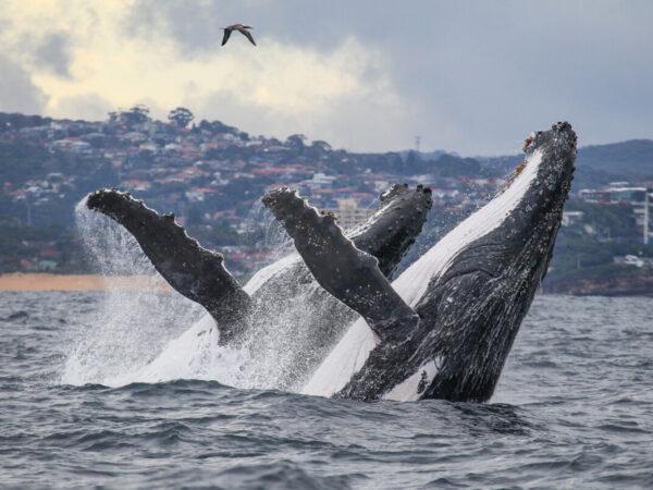 Las 8 ballenas más grandes del mundo