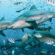 Los 7 tiburones más grandes del mundo