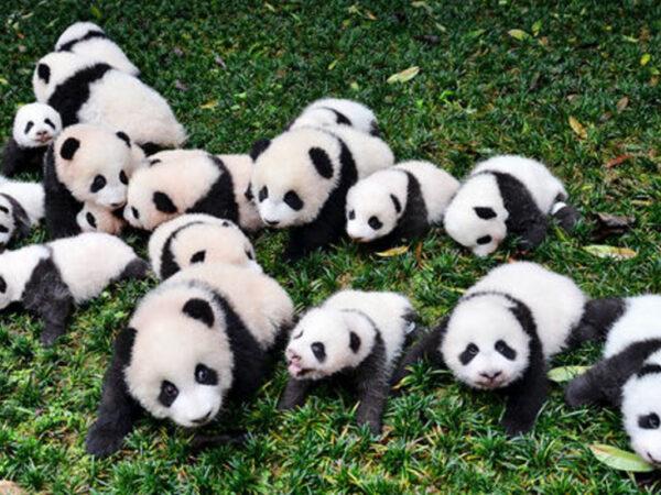 Los 8 animales en blanco y negro más bonitos del mundo