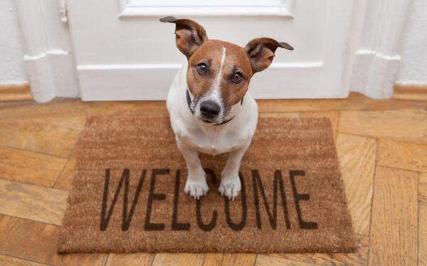 Los 9 mejores perros para pisos