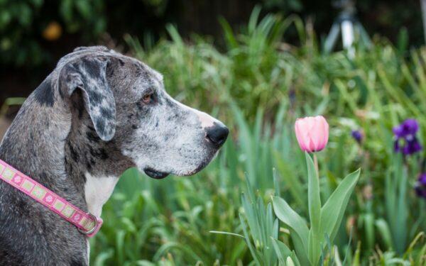 Plantas tóxicas para perros
