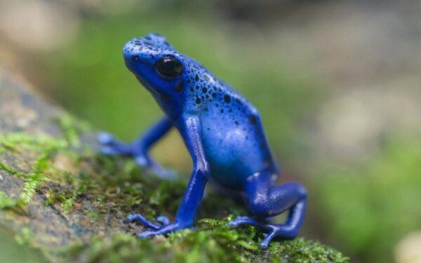 Animales azules