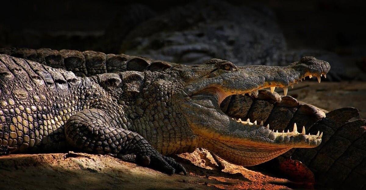 Los 9 cocodrilos más grandes del mundo