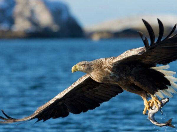Las 7 águilas más grandes del mundo